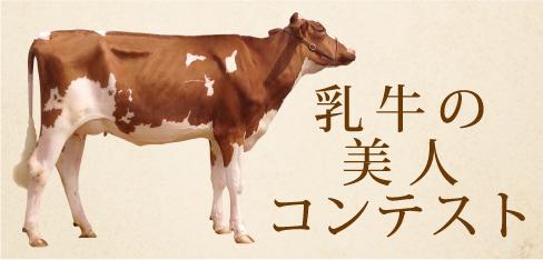 乳牛の美人コンテスト
